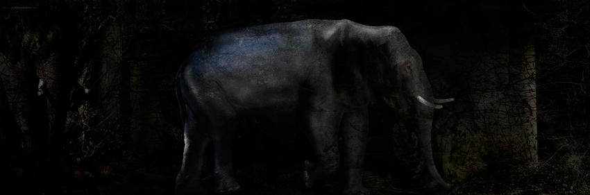 Toru Tanno [Subterranean-†elephant_small]