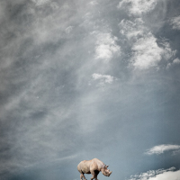 Toru Tanno [Rhinoceros in the cloud]