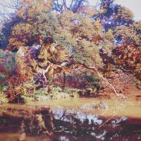 Yasushi Ikejiri, Trees Beside Wadabori Pond, 2014, h130.3×w162 cm, Oil on Canvas