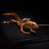 Hajime Emoto, Cordylus monocornus, 30×20×8 cm (Photo by Takeo Moriwaki)