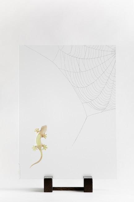 Kaimon Yoshimizu, Japanese Gecko: Spider's Web, 2020, h323×w220×d93mm, boxwood, mineral pigment, gold leaf, platinum leaf, glass, Japanese Zelkova, lacquer_1