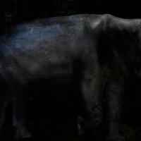 丹野徹「Subterranean-†elephant」