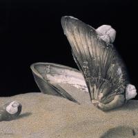 篠田教夫「 夢のなきがらIII」 h170×w230 mm