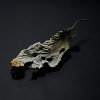 中村恒克×須藤和之「落ち葉-残り火-」