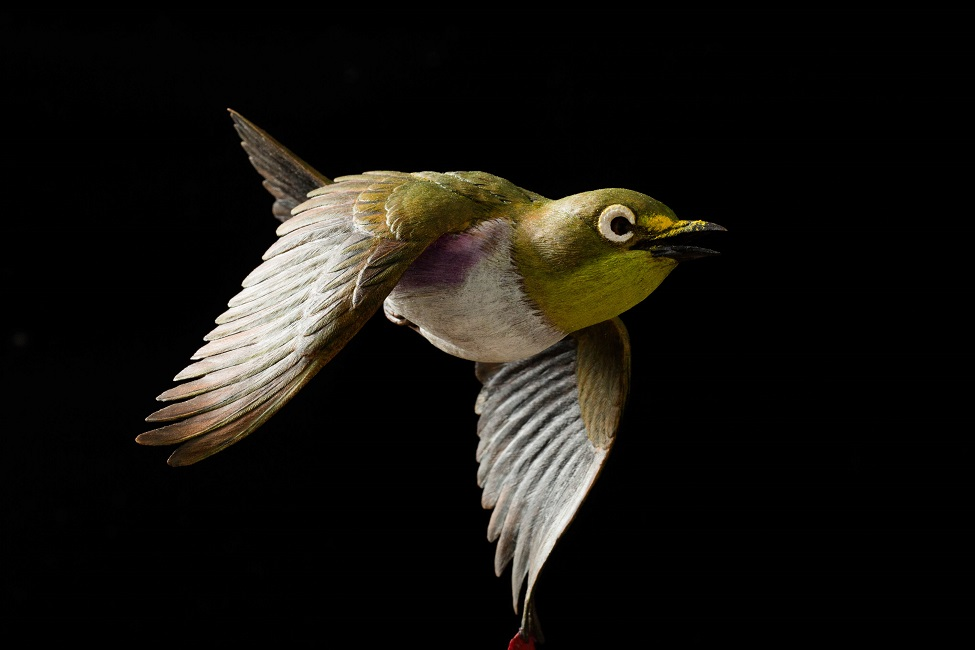 門永哲郎「鳥媒花」2020年、h20×w17×d21 cm、もちの木(台、目の回りの白い羽)、椿材(メジロ、椿)、琥珀(メジロの目)、油彩_3