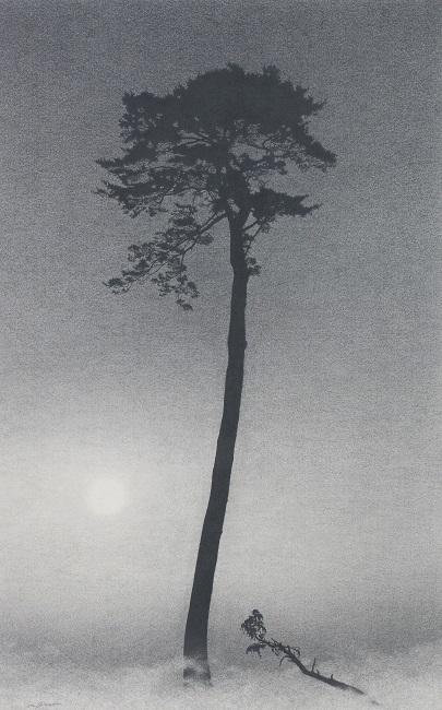 篠田教夫「孤松図Ⅳ」h48×w30㎜,鉛筆,アルシュ紙